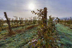 Eisiger Tag im Apfelgarten Stockfoto