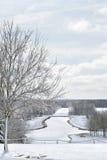 Eisiger Teich und Bäume im Park Lizenzfreie Stockfotos