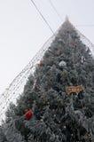 Eisiger Weihnachtsbaum Stockfotografie