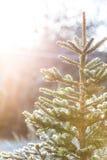 Eisiger Weihnachtsbaum draußen Stockfoto