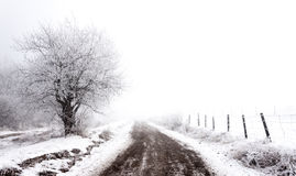 Eisiger Winter Stockfotografie