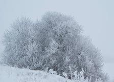 Eisiger Winter-Strauch Lizenzfreie Stockbilder