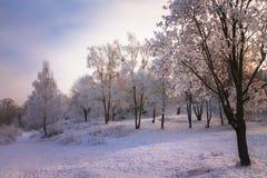 Eisiger Winterabend im Park Stockfotos
