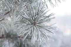 Eisiger Wintermorgen Stockbild