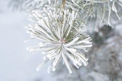 Eisiger Wintermorgen Stockfotografie