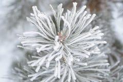 Eisiger Wintermorgen Stockbilder