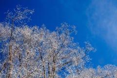 Eisiger Wintertag stockfotos