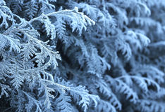 Eisiger Winterzweighintergrund Stockfoto