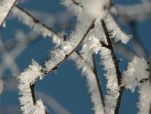 Eisiger Zweig Stockbild