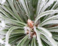 Eisiger Zweigbaum Stockbilder
