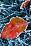 Eisiges Blatt Stockbild