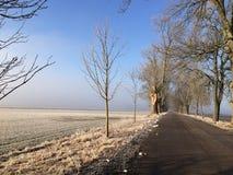 Eisiges Feld und Allee unter blauem Himmel lizenzfreie stockfotos