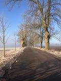 Eisiges Feld und Allee unter blauem Himmel stockfotografie
