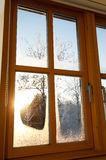 Eisiges Fenster Stockfoto