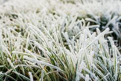 Eisiges Gras Stockfotos