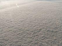 Eisiges Gras Stockfoto