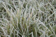 Eisiges Gras lizenzfreies stockfoto