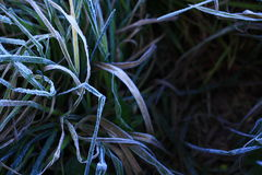 Eisiges Gras lizenzfreie stockbilder