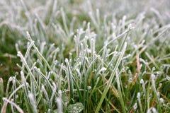 Eisiges Gras Lizenzfreies Stockbild