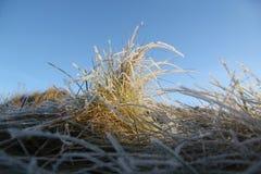 Eisiges Gras Lizenzfreie Stockfotografie