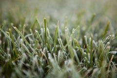 Eisiges Gras des Herbstes Lizenzfreie Stockfotos