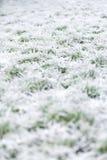 Eisiges Gras des Morgens Stockfotografie