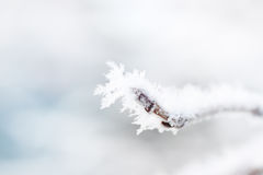 Eisiges iny auf einem Baumast Stockbilder