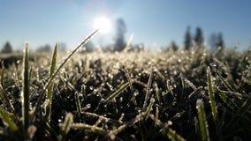 Eisiges Morgengras stockbilder