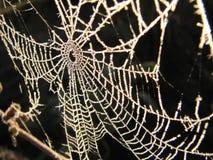 Eisiges Spinnen-Web Lizenzfreies Stockbild