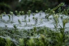 Eisiges Spinnen-Web Stockfotografie