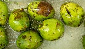 Eiskalte Kokosnüsse Stockfotografie