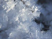 Eiskristalle auf dem Gras im November Stockbild