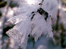 Eiskristalle auf einem Baumzweig Stockbilder