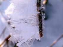 Eiskristalle auf einer Niederlassung Stockfotos