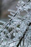 Eisregen Stockbilder