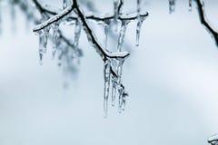 Eisregen Lizenzfreie Stockbilder