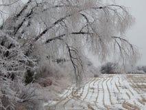 Eisregen stockfotografie