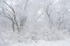 Eisregen umfasste die Bäume und die Oberfläche in einem Parkwald Lizenzfreie Stockfotos