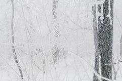 Eisregen umfasste die Bäume und die Oberfläche in einem Parkwald Stockfoto
