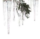 Eisschleifen und Eis umfaßten Zweig Stockbild