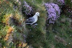 Eissturmvogel Lizenzfreies Stockbild