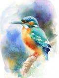 Eisvogel-Vogel-Aquarell-Illustrations-Hand gezeichnet Lizenzfreie Stockfotografie
