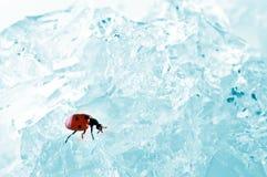 Eiswürfel in der blauen Leuchte Stockbild