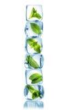 Eiswürfel mit grünen tadellosen Blättern Stockbild