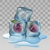 Eiswürfel mit Pflaume Lizenzfreie Stockfotografie