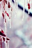 Eiszapfen über Zweigen Lizenzfreies Stockbild