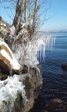 Eiszapfen auf Bäumen Lizenzfreies Stockbild