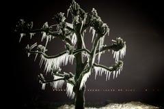 Eiszapfen auf dem Baum Stockbild