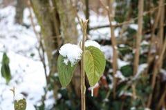 Eiszapfen auf den gefrorenen Blättern lizenzfreies stockbild