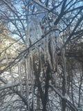 Eiszapfen auf den Niederlassungen eines Baums Stockfotografie